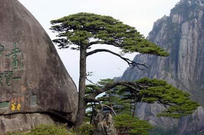 ภูเขาหวงซาน หังโจว เซี่ยงไฮ้ 6 วัน 5 คืน